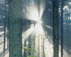rs-biomass-vision